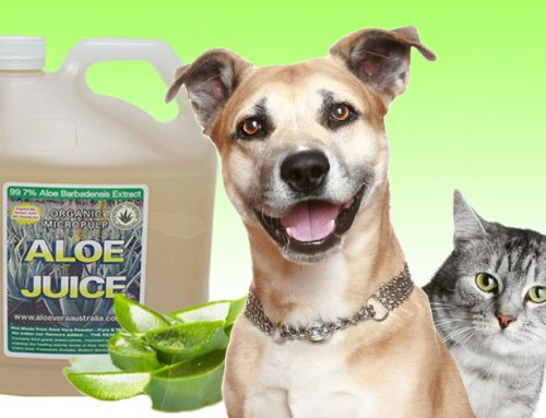 Can dogs and cats eat or drink Aloe Vera?