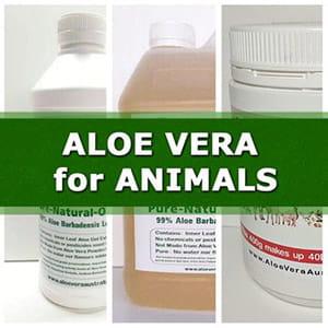Aloe Vera For Animals