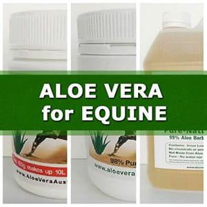 Aloe Vera Equine