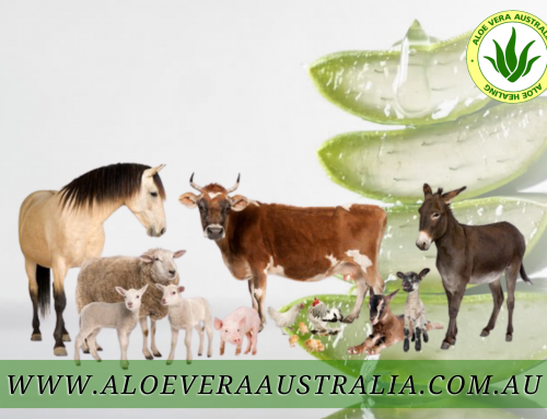 Helping your Animals – Naturally!